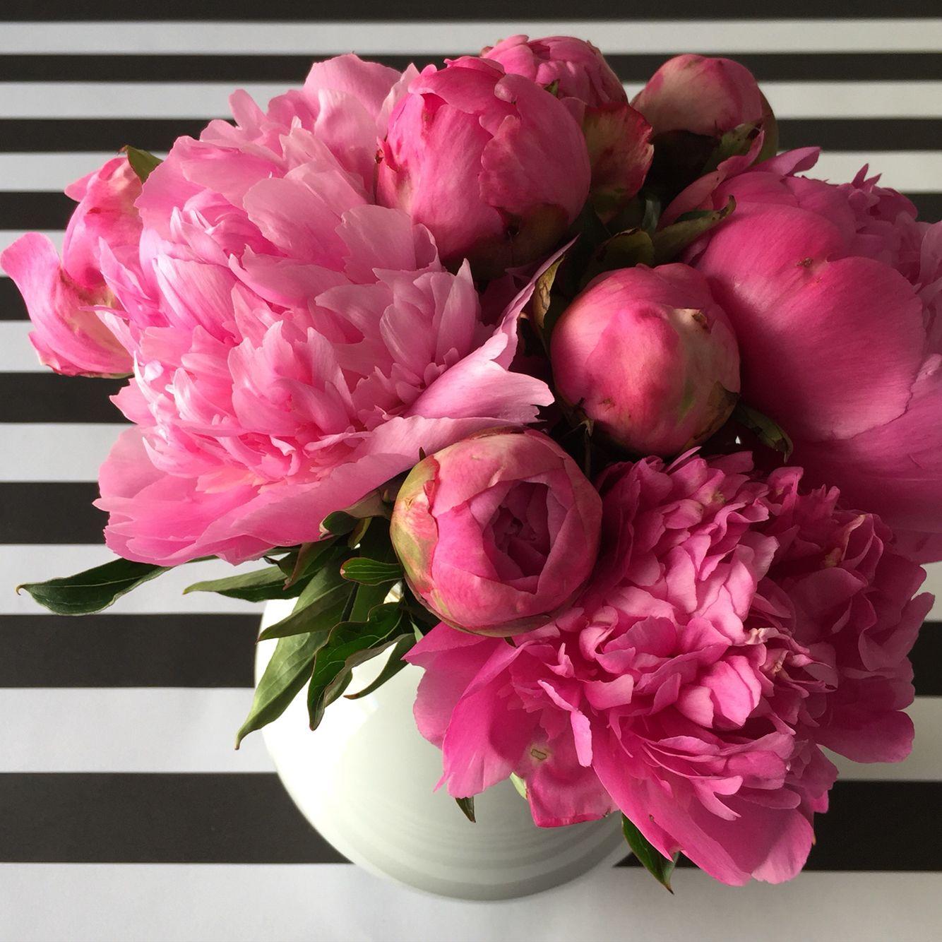 автором цветы пионы открытки красивые ущерба