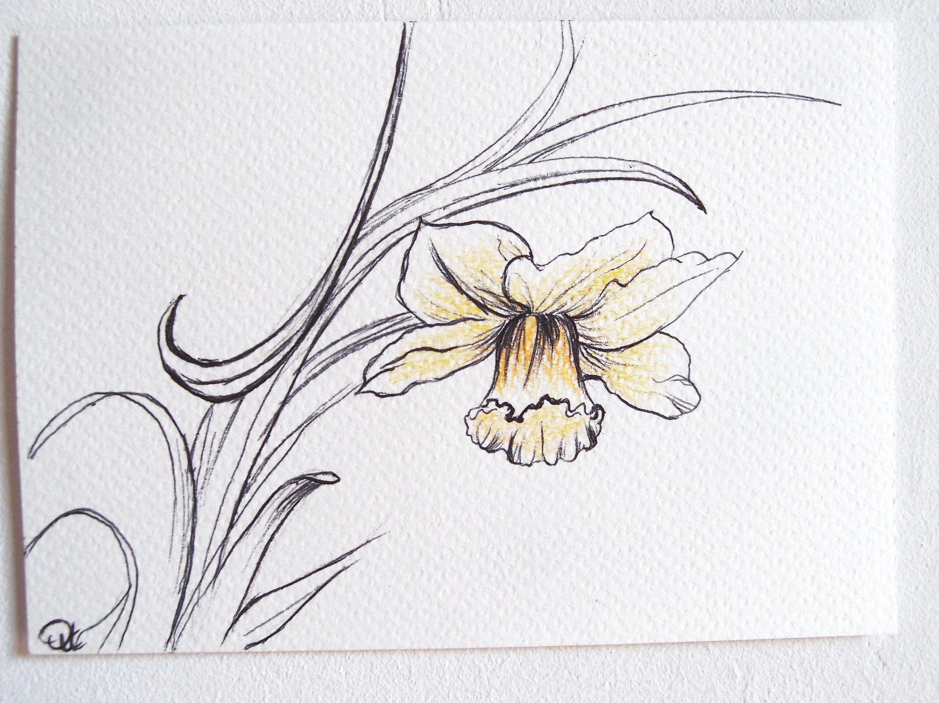 Dessin de fleur j comme jonquille s rie alphabet - Dessin jonquille fleur ...