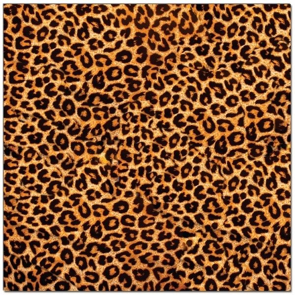 Leopard Print Background Clip By Angelica Love2giggle 1 Found On Polyvore Leopard Print Background Leopard Pattern Printed Backgrounds