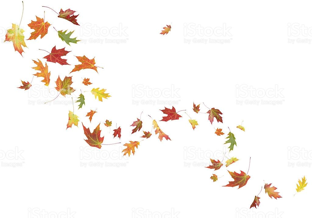 Autumn Leaves Blowing In The Wind Stock Fall Leaves Tattoo Autumn Tattoo Wind Tattoo