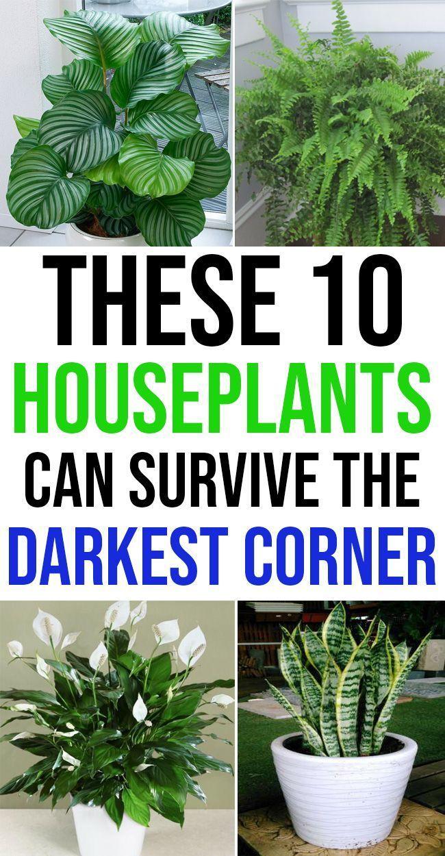 10 Zimmerpflanzen, die die dunkelste Ecke Ihres Hauses überleben können   #dun...