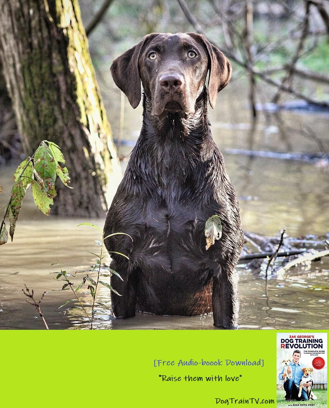 Remember If This Is Your Dogs First Duck Hunt Be Prepared I