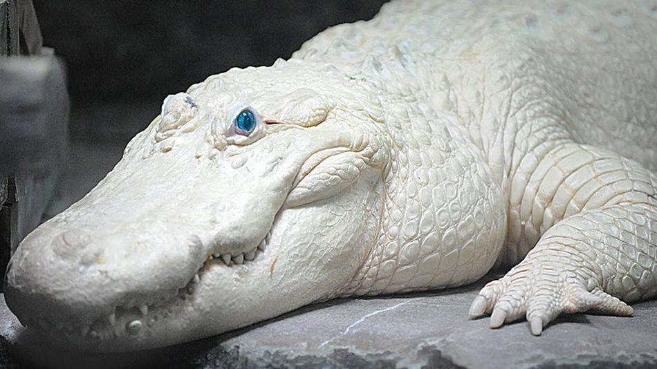Photo of 23 Albino Animals So Stunning You Will Literally Gasp