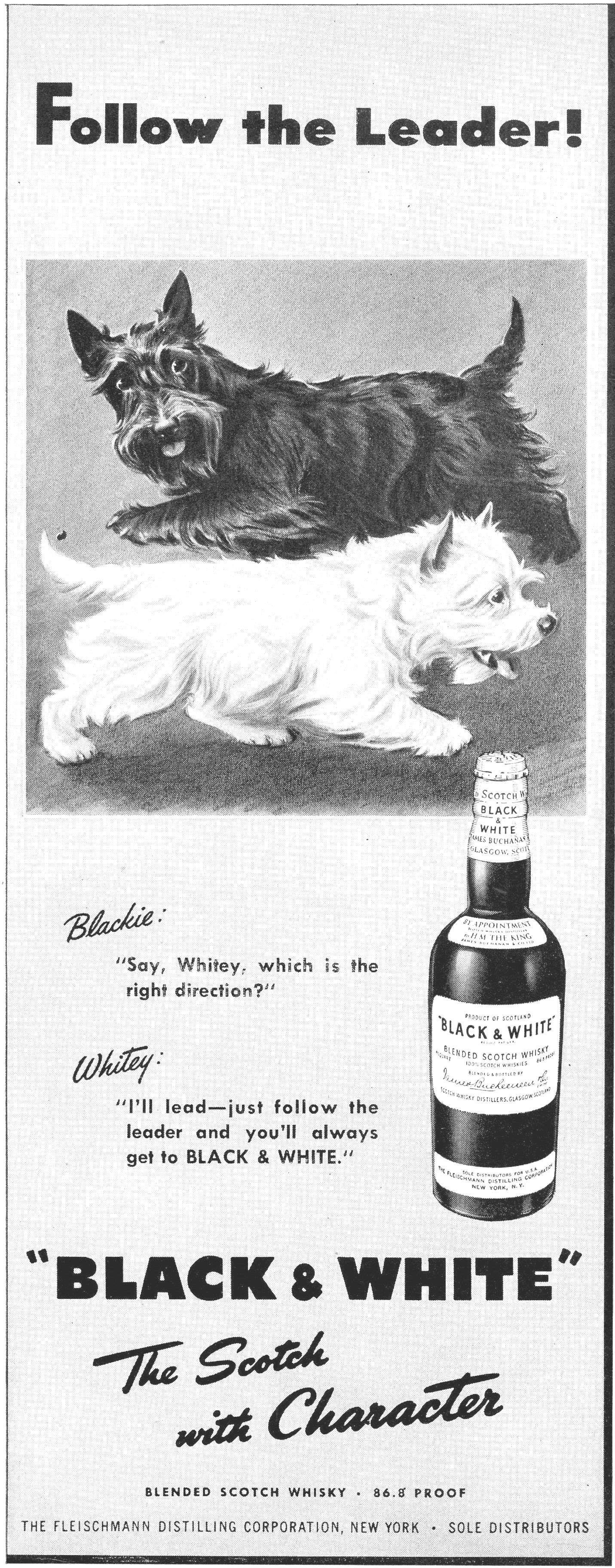 Follow The Leader Scottish Terrier Scottie Dog Terrier