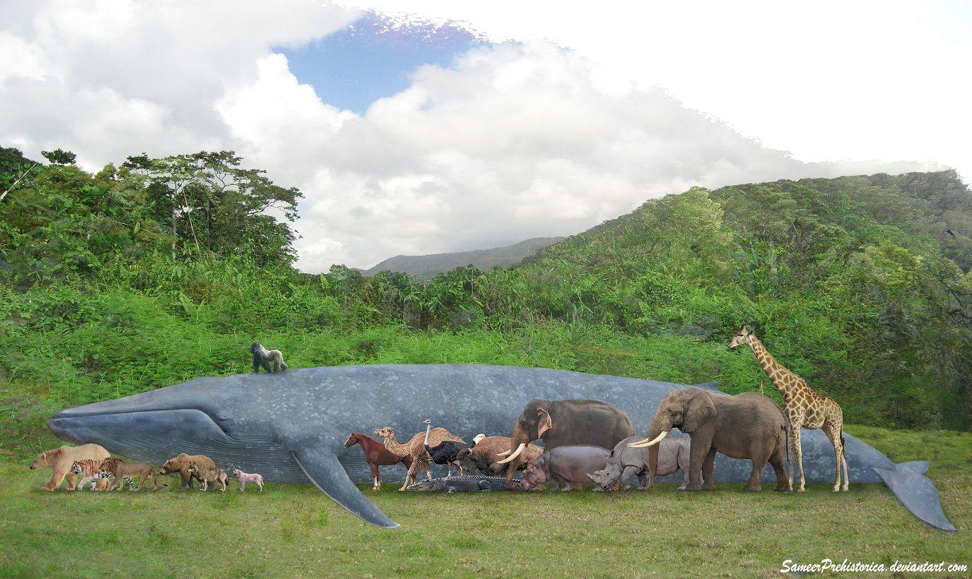 Animal Size Chart Comparison