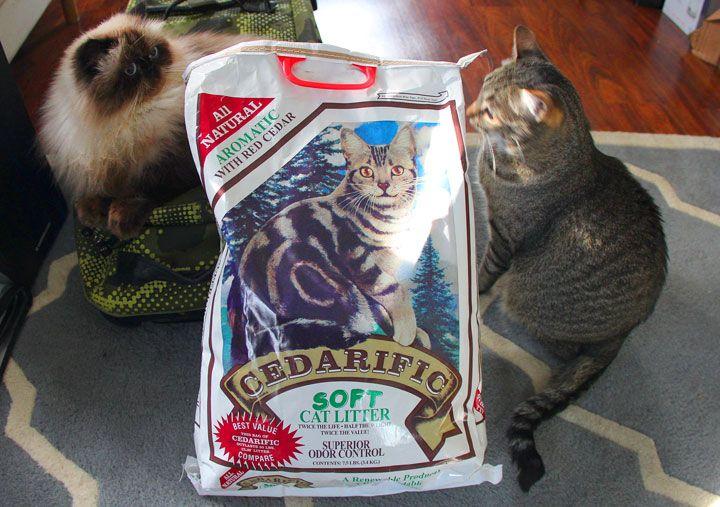 Finally found litter of my dreamsnatural cat litter