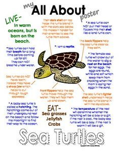 Photo of My All About Sea Turtles Book – Ocean Animal Unit Study