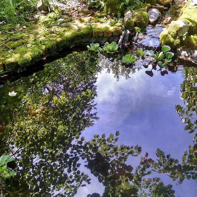 The little backyard garden pond reflecting the blue sky, clouds, the maple and basswood trees. Scroll to see what it looks like when I toss in a pebble. Have a great Friday evening.  #country_features #blueskies #gardenpond #everything_home_front #everything_imaginable #igers_wisconsin #midwestmoments