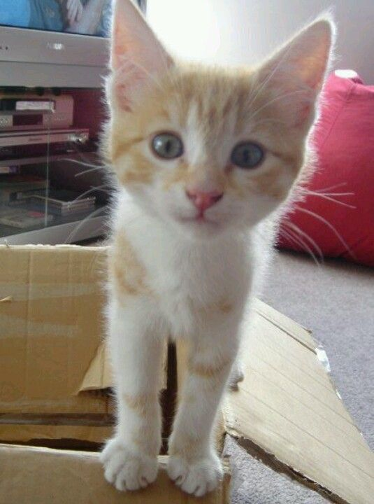 My ginger cat...Pumpkin or Spunky as we like to call her. So curious and naughty!