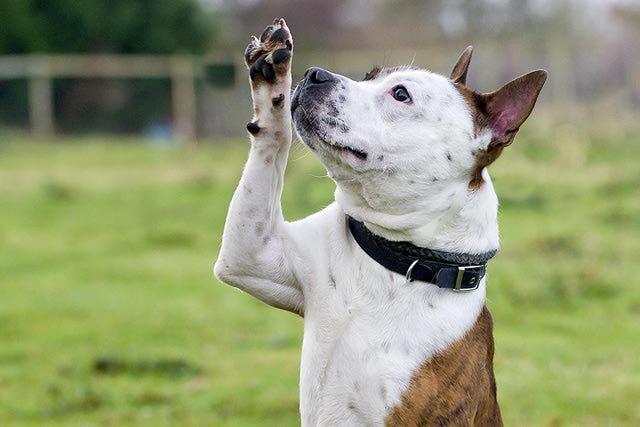Teach Your Dog To Wave Training Your Dog Dog Training Dog Hacks