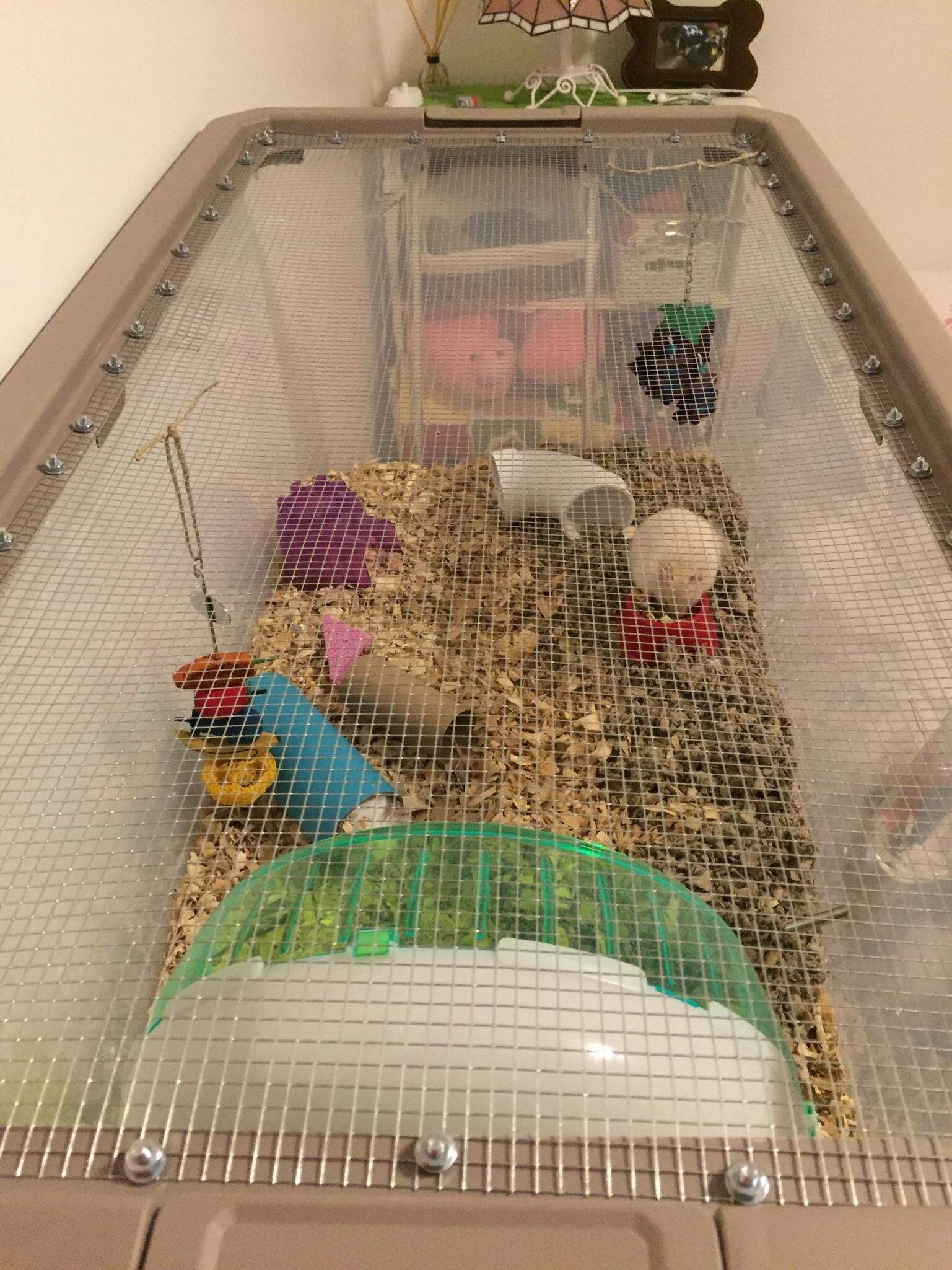 Pin By Lilly B On Animal Addict In 2020 Hamster Bin Cage