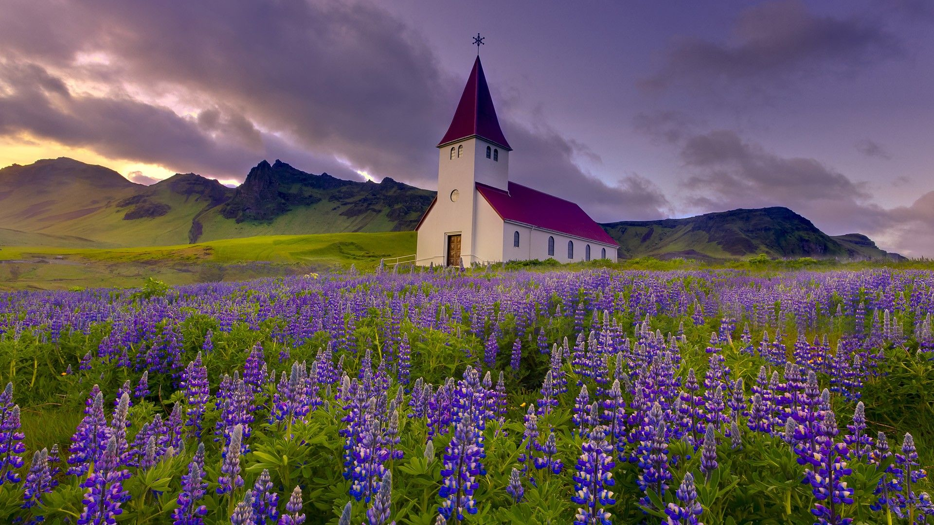 Iceland Chapel Purple Flowers Lupine