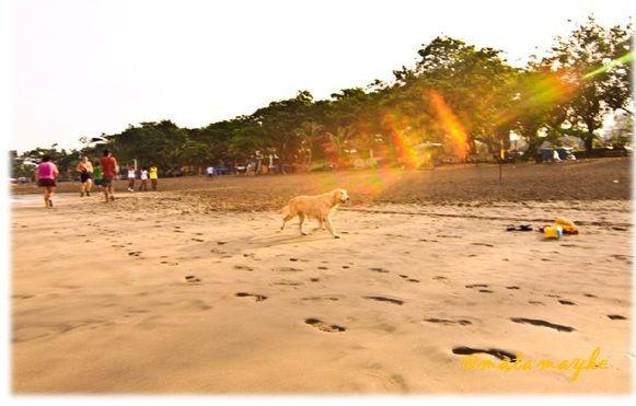 run dog run, legian beach, bali, indonesia