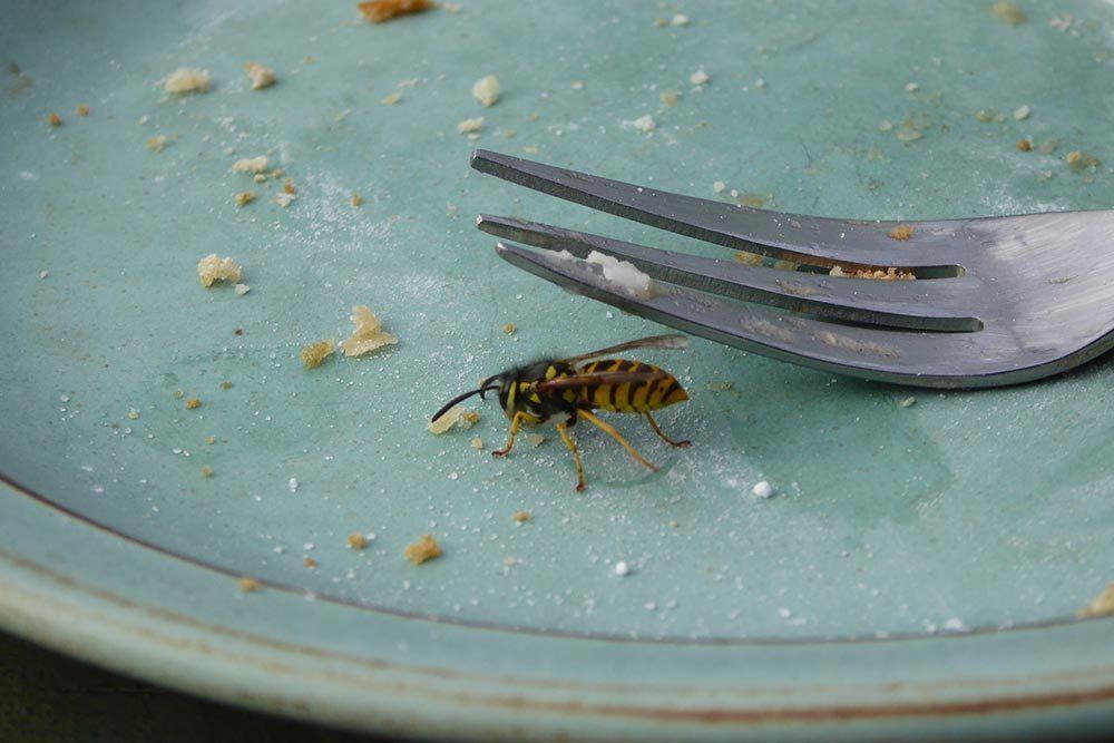 Simpelt trick til at undgå hvepse Craft
