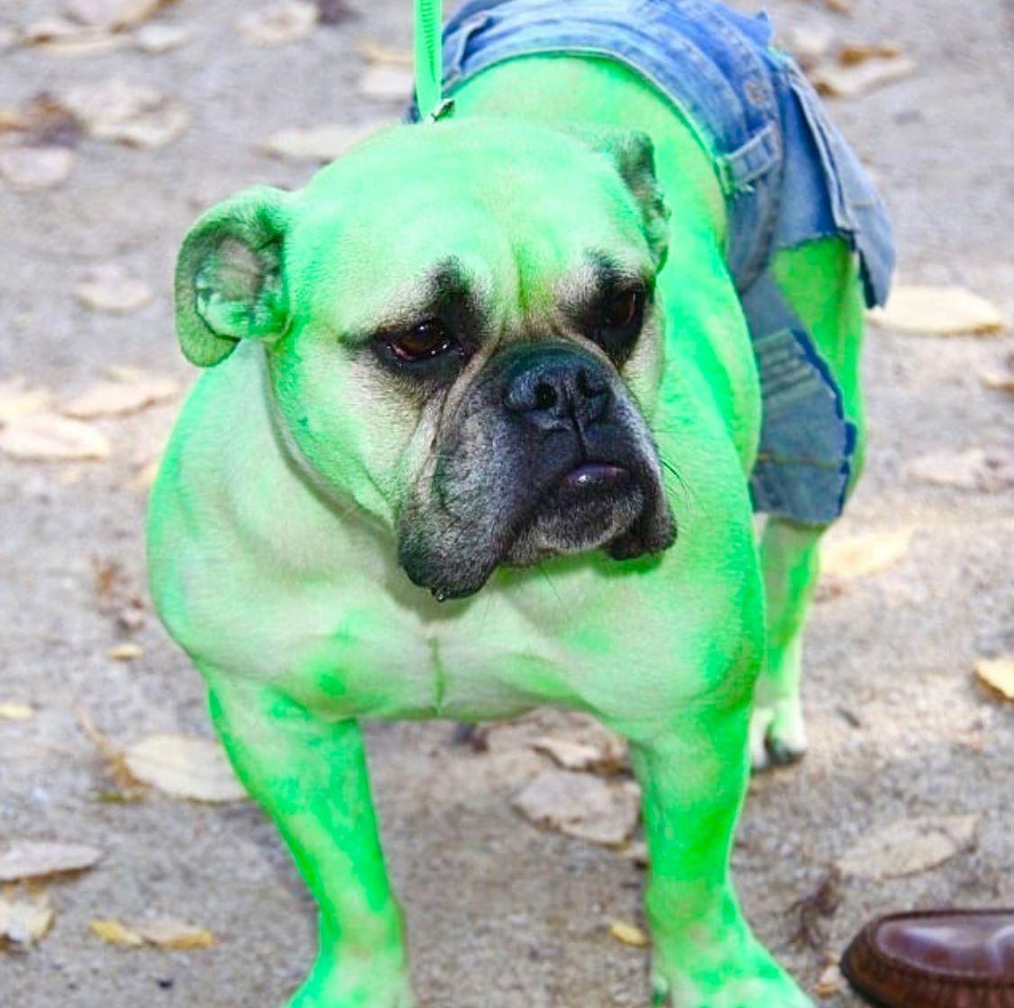The Hulk Halloween Pet Costumes Dogs