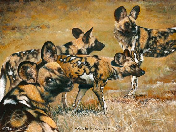 Colours of Africa / African Wild Dogs   Wild dogs, African ...