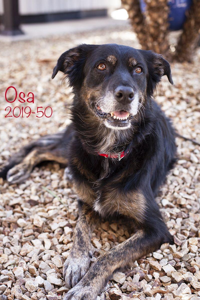 Adopt Osa On Dog Adoption Dogs Retriever Mix