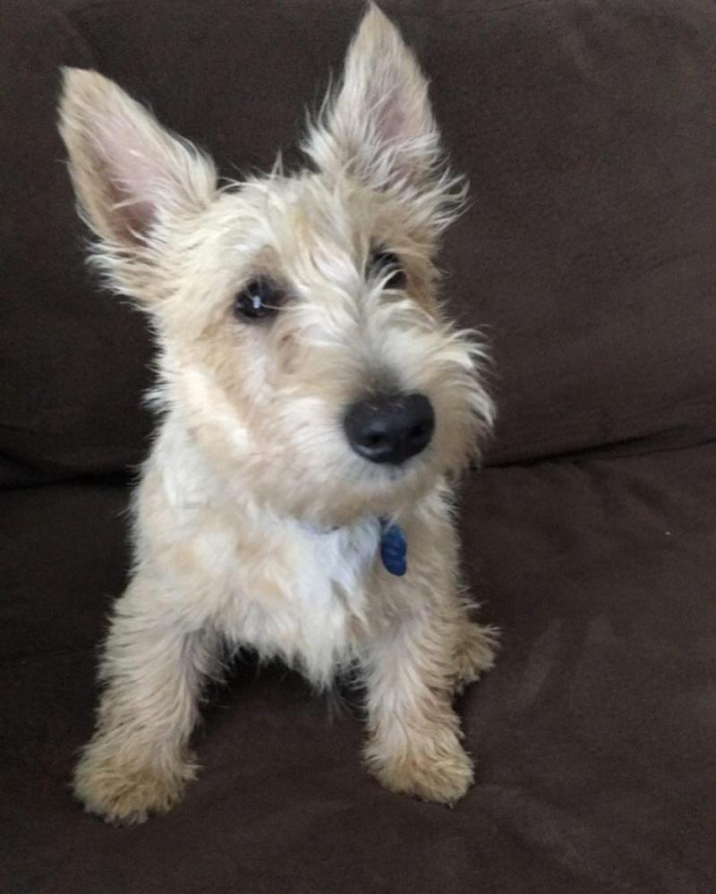 Adopt Martin Fergus (Marty)-Pending Adoption on   Petfinder