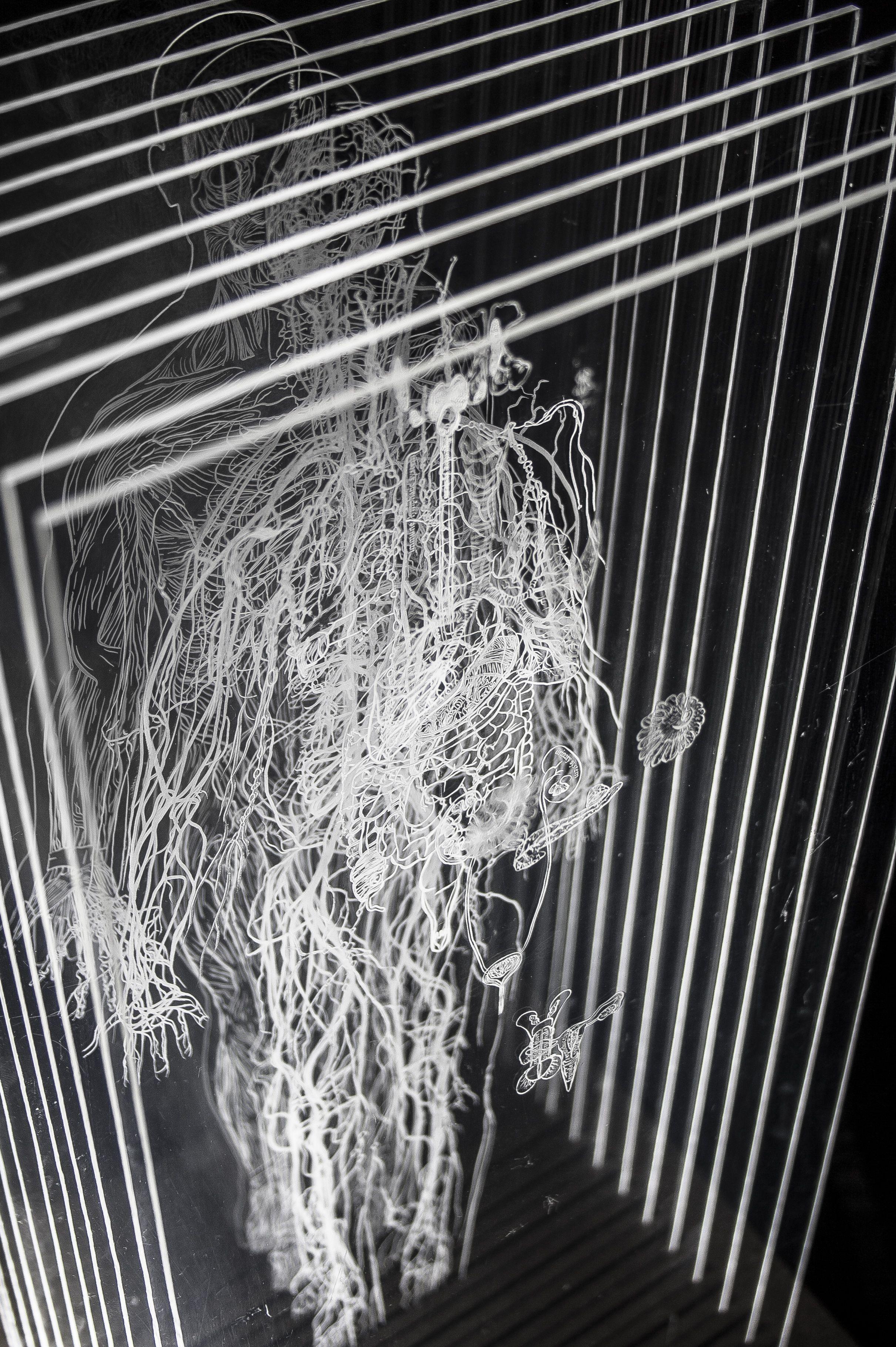 A set of 11 laser engraved movable plexiglasses illustrating the human body systems linear illustrations designed in adobe illustrator 45 cm x 19 cm
