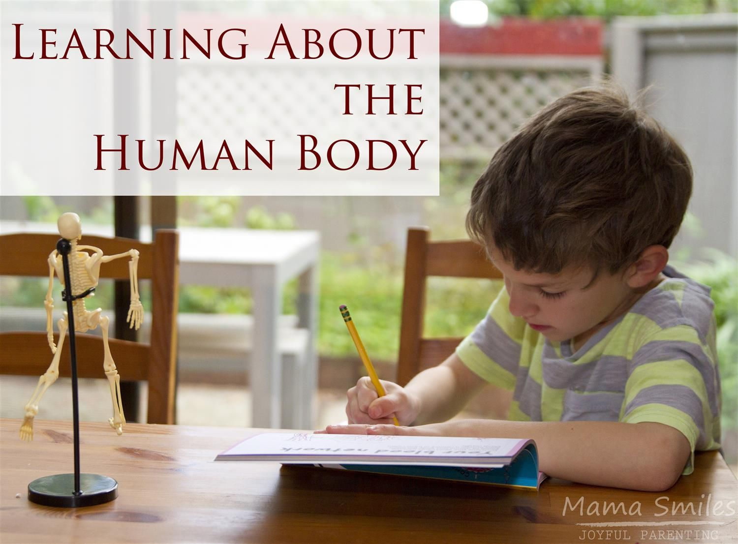 Teaching Kids About The Human Body