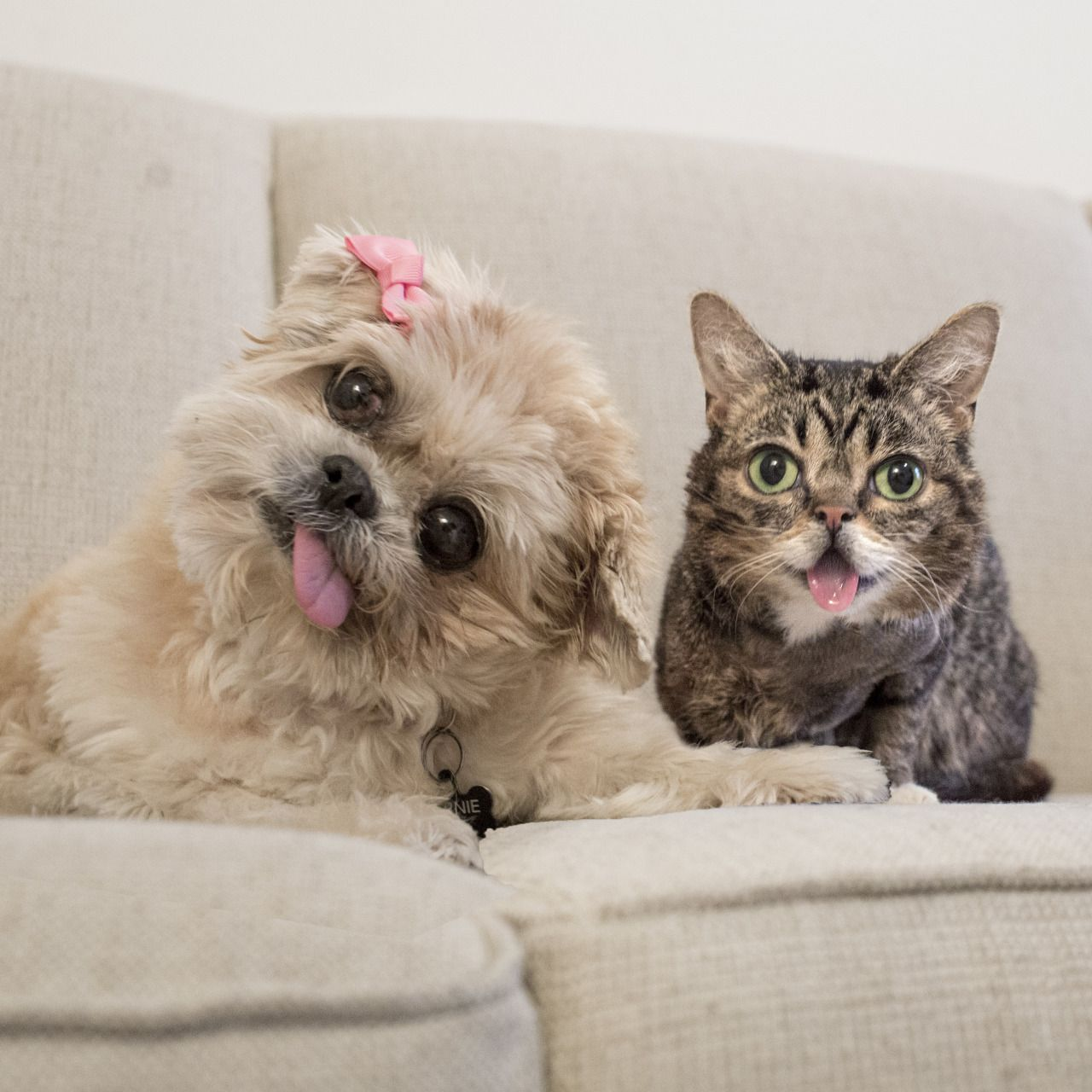 Marnie and Lil Bub forever Cats & Kittens Pinterest