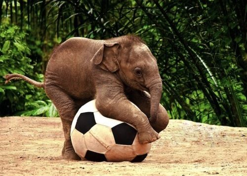 I Want An Elephant Someone Make Me A Miniature Elephant With
