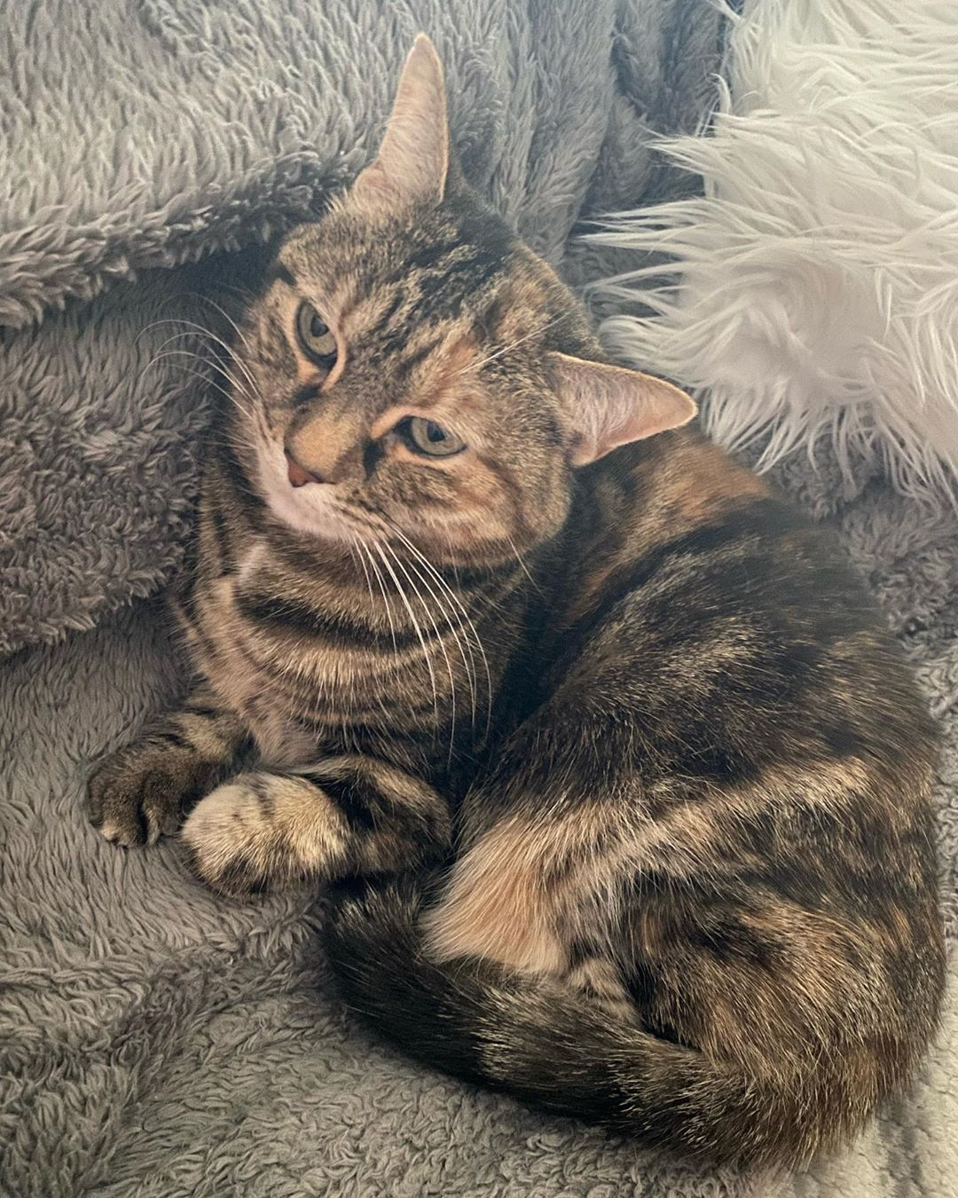 Ally cat loving the couch ... | Cute cat drawing, Scared cat