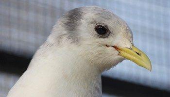 Pin On Wild Bird Rehabilitation