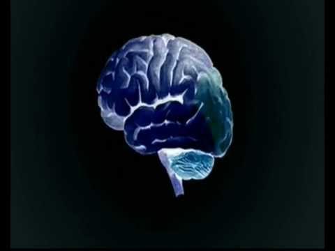 horen, zien, voelen, ruiken, ademen... alles gaat via je hersenen. Welk gedeelte doet wat? En waarom voel je meer met je handen dan met je voeten? Victor Lamme is hersenonderzoeker bij de UvA en legt alles uit. Programma: SchoolTV-Weekjournaal.