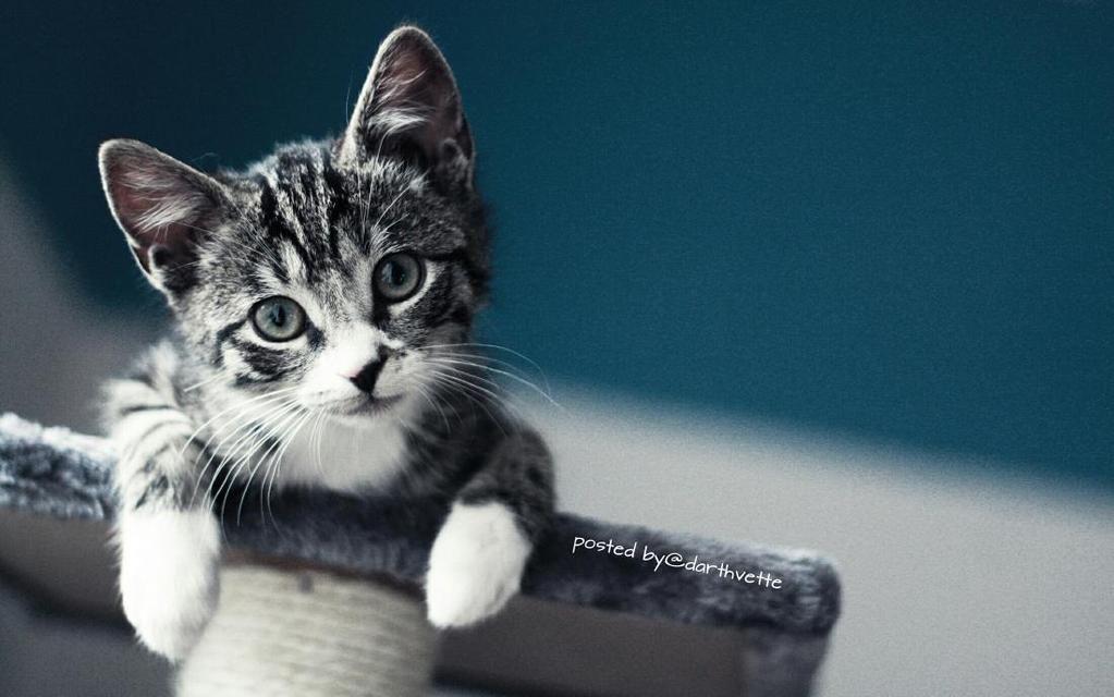 Robert On Twitter Kittens Cutest Cute Animals Baby Cats
