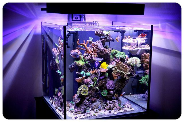 Rimless 60 gallon solana xl with panorama led lighting for Cube saltwater fish tank