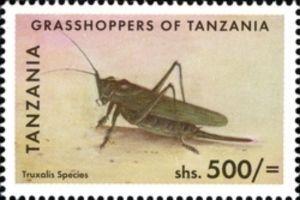 Horned Grashopper (Truxalis sp.)