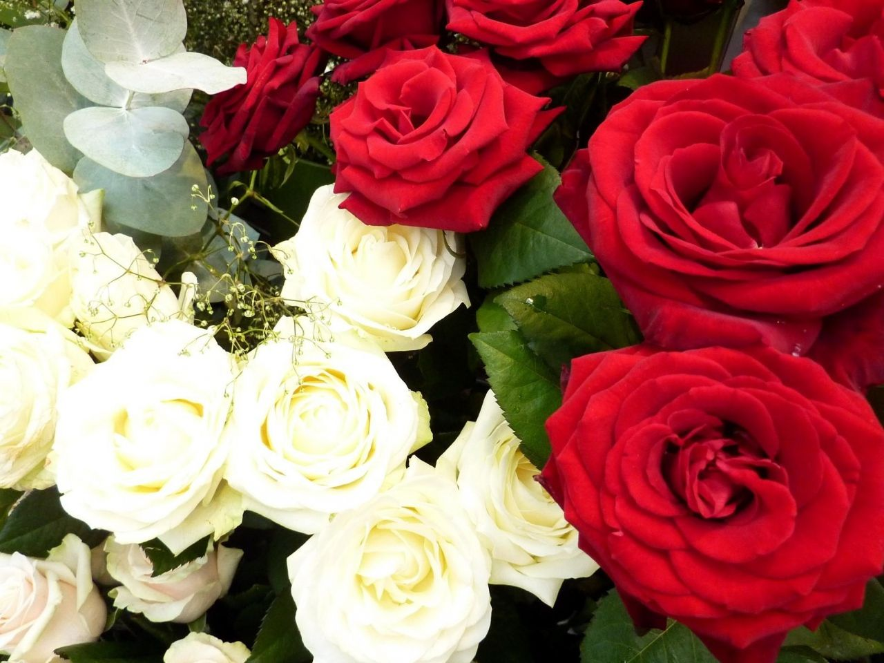 Fleurs Roses Images Fonds D Ecran Vecteur Rouge Fond Blanc Materiau De Gypsophile Fleursordinateur Telephone Cellulaire Fonds Fond Ecran Fond Blanc Fleurs