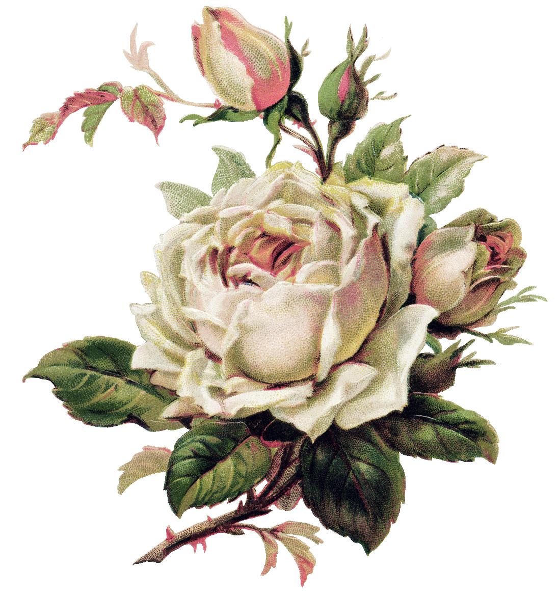 Открытка винтажная роза