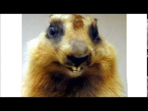Marmotte Chiante (Humour) - C'est ca la vie...