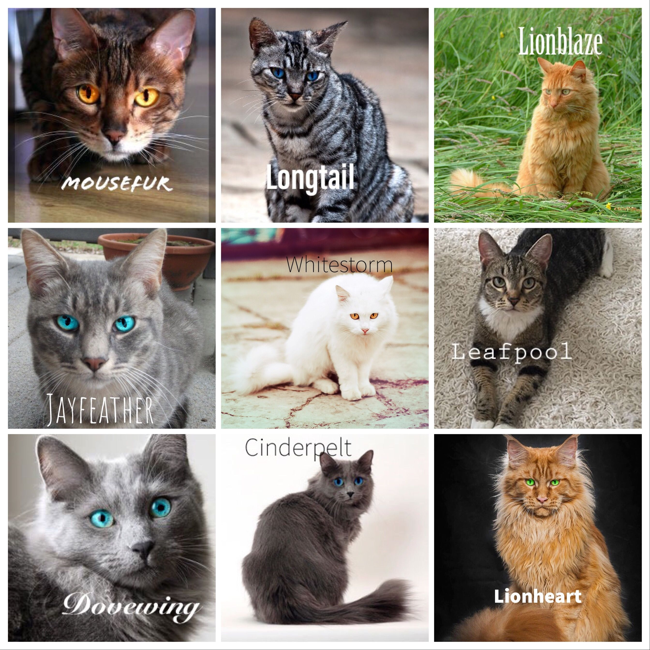 Pin By Amaili Miller On Warrior Cats Warrior Cat Memes Warrior Cats Warrior Cats Art