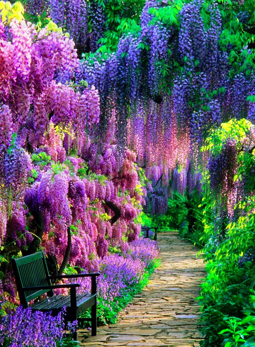 Wisteria tunnel kawachi fuji garden japan 1 garden for Beautiful flower landscapes