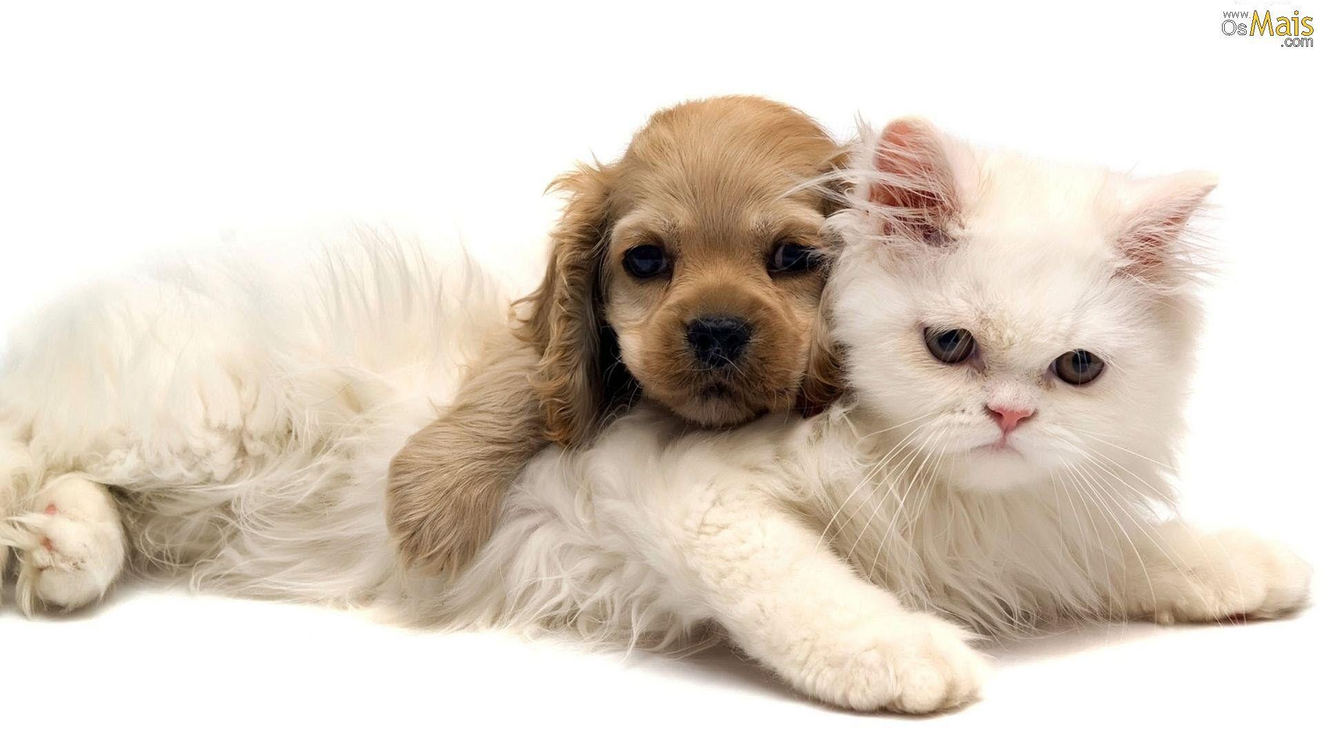 Resultado de imagem para cães e gato