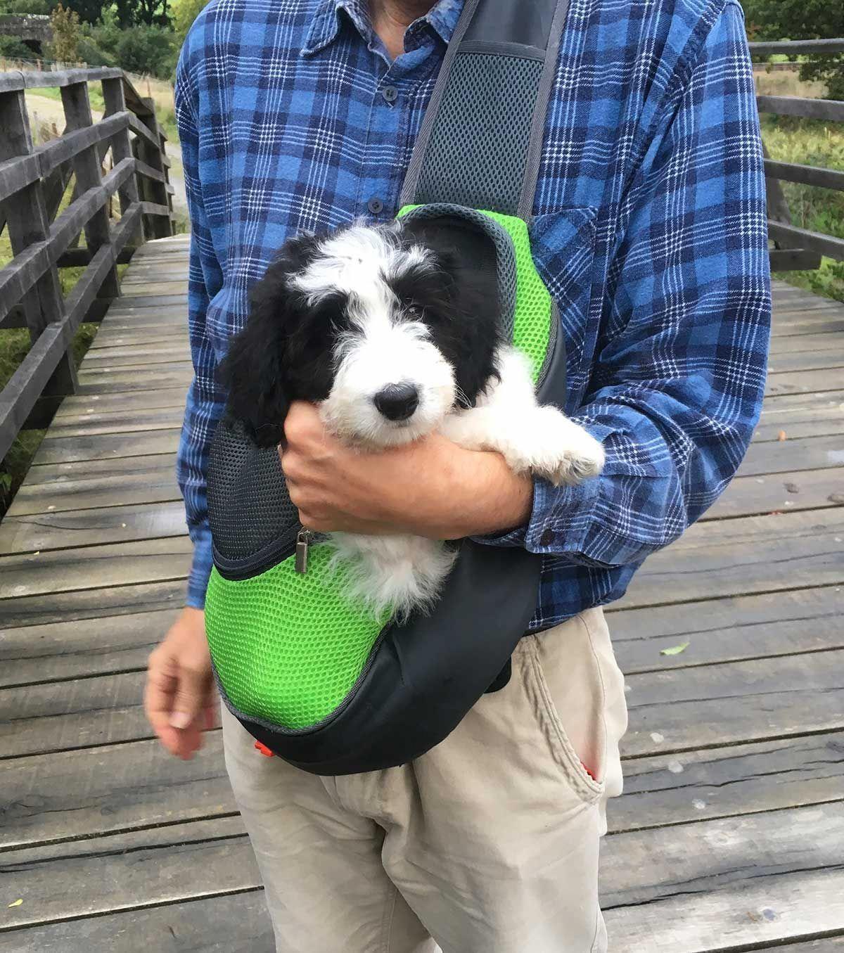 Pin On Dog Training Me