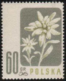 Znaczek Edelweiss Polska Kwiaty Pod Ochrona Mi Pl 1022 Sn Pl 784 Yt Pl 906 Pol Pl 879 Stamp Printing Stamp Prints