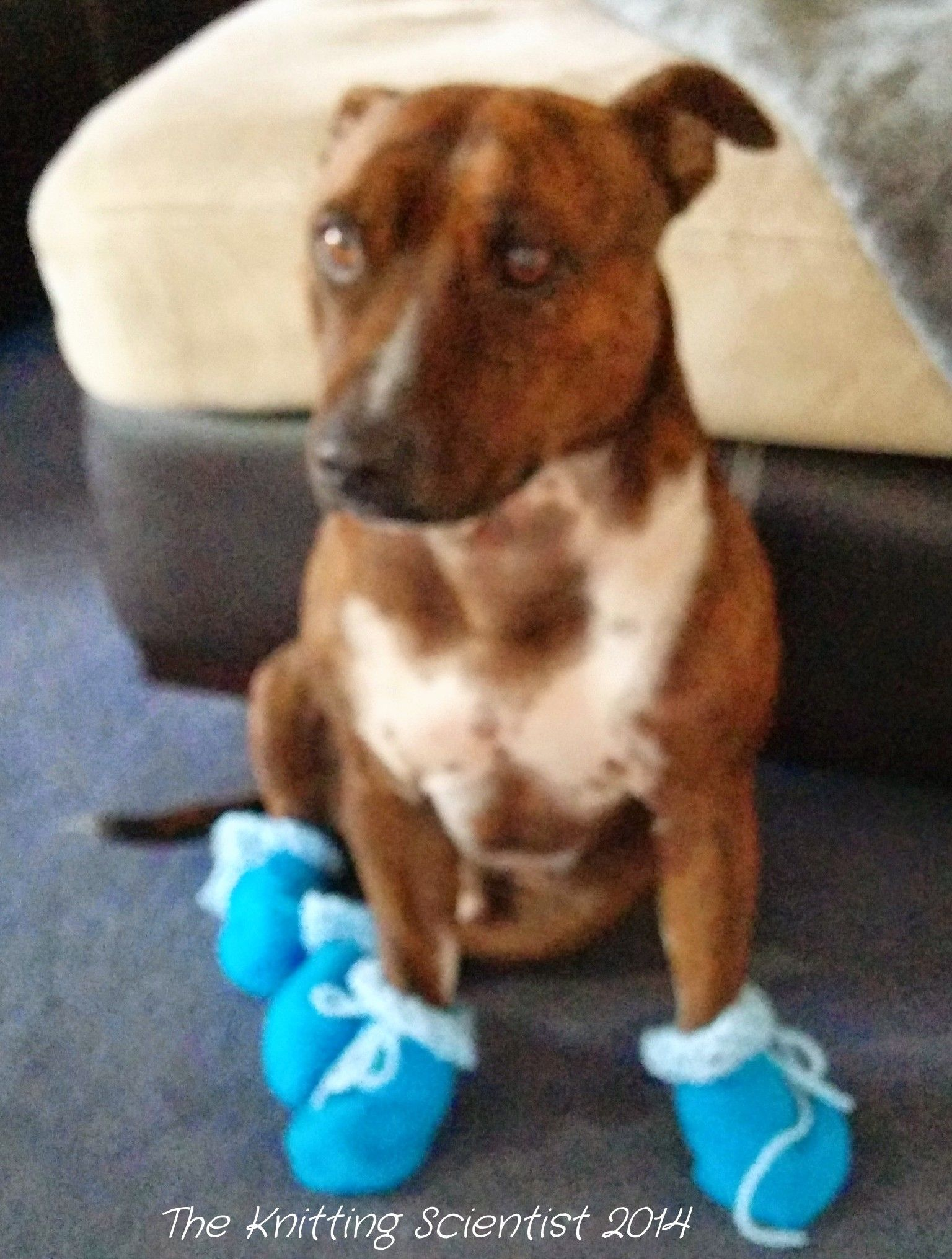 Dexter in his new set of crochet booties!