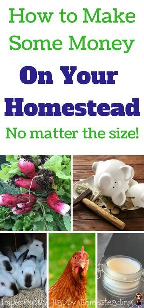 How to Make an Income From Your Backyard Homestead ...