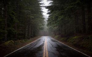 Vista previa de la carretera fondo de pantalla, la niebla, la naturaleza, los…