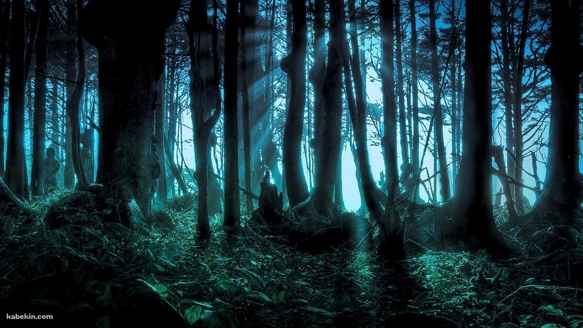 ほの暗い森 1920 X 1080 の壁紙 壁紙キングダム Pc デスクトップ版