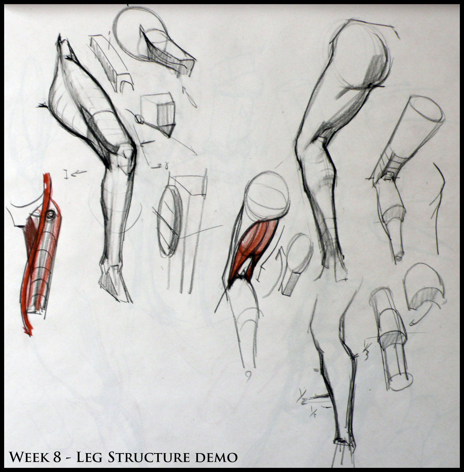 Analytical Figure Drawing SP08: Week 8 - Leg & Knee Structure Demo ...
