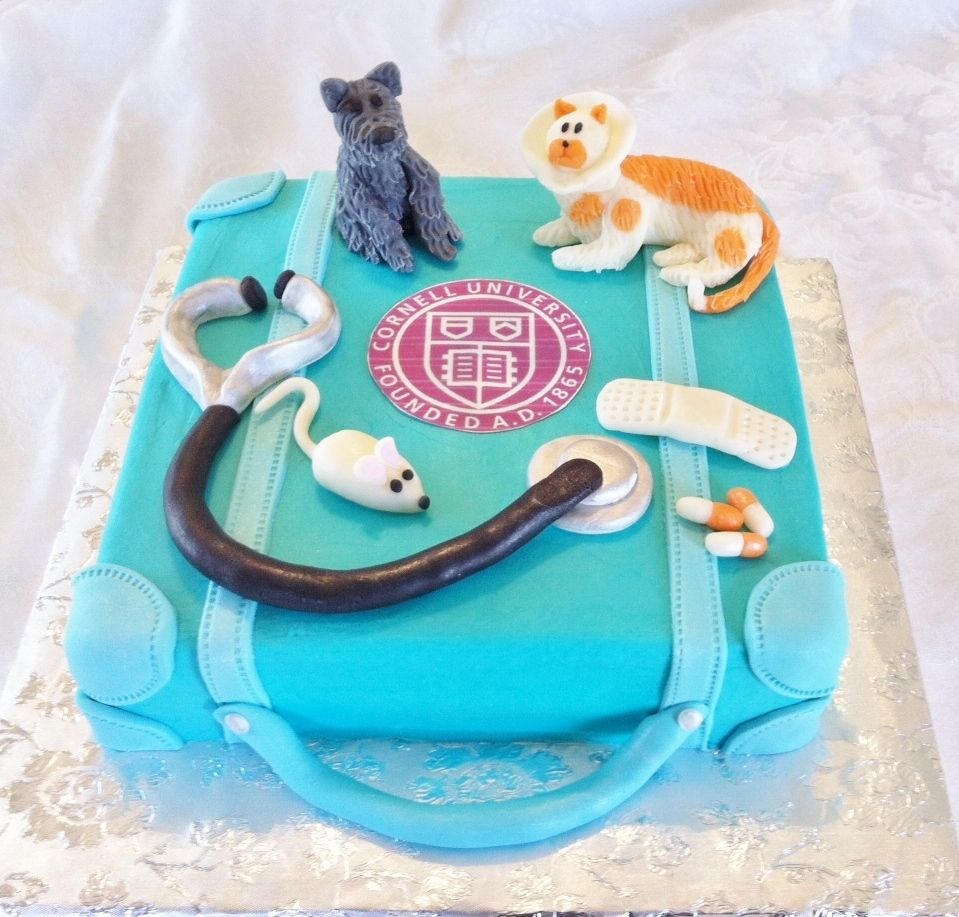 Veterinary cake Buttercream iced cake with modeling chocolate