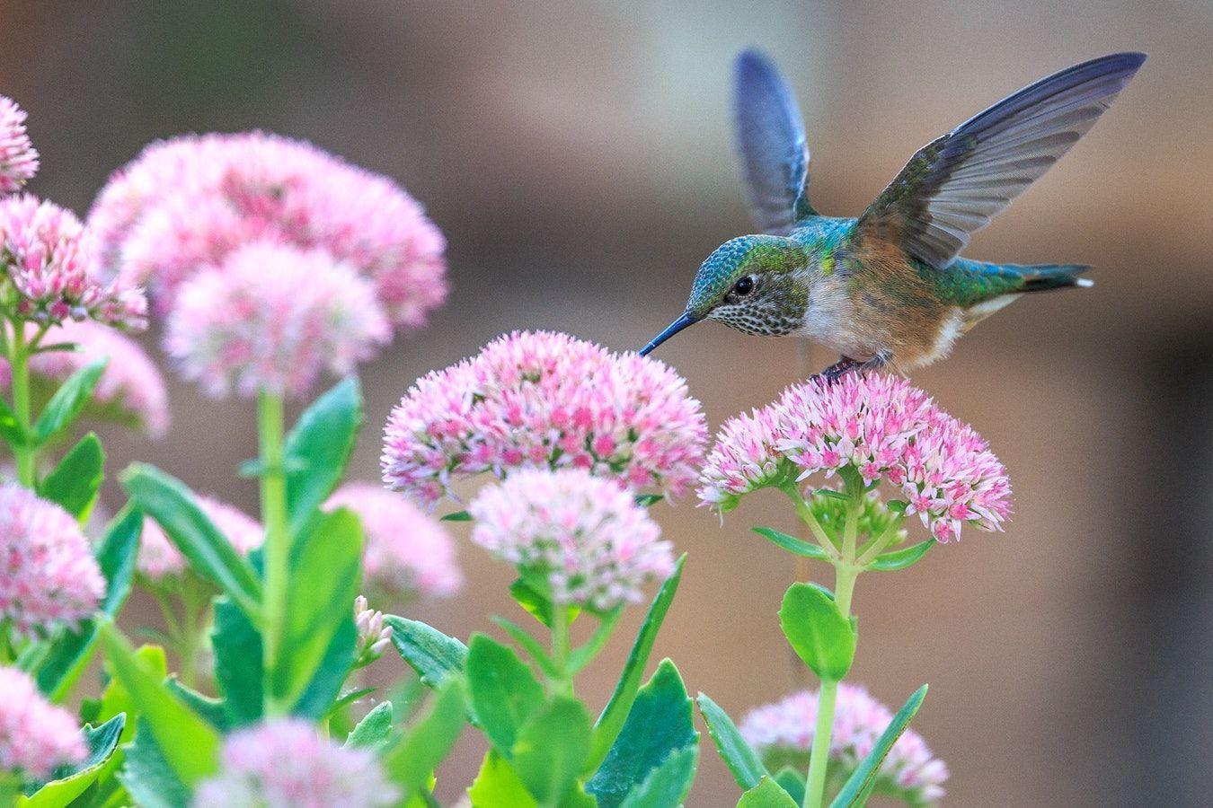 Twitter How to attract hummingbirds, Bird poster, Birds