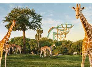Busch Gardens Tampa Bay Discount Tickets Busch Gardens Tampa Busch Gardens Tampa Bay Busch Gardens