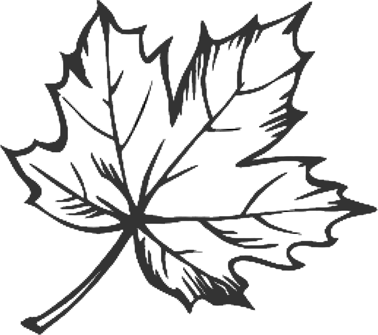 Line Drawing Leaves : Line drawing maple leaf google search doodles