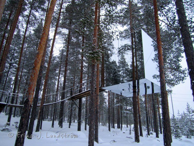 Tree Hotel Harads Sweden Google Search Treehotel In Harads
